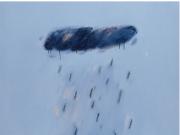 流行雨--陈淑霞